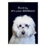 BIRTHDAY - HUMOR W/DOG/BLACK-RIM GLASSES GREETING CARD