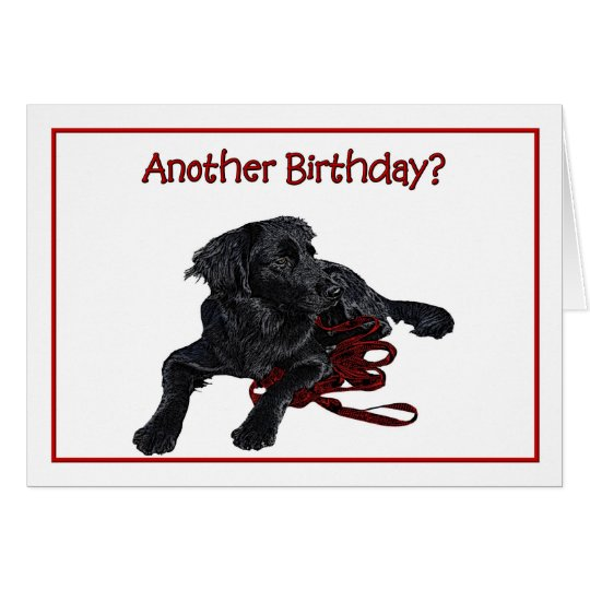 Birthday Humour Black Labrador Retriever Card