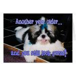 Birthday Humour - Cute Shih-Tzu Puppy Greeting Card