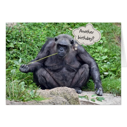 Birthday humour with chimpanzee card