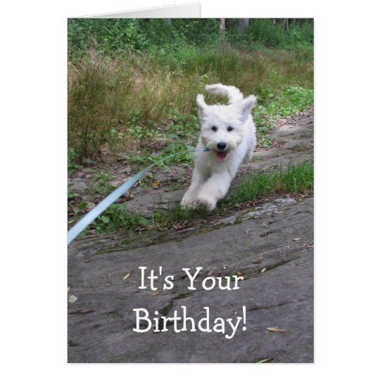 Birthday Humour with Cute Running Goldendoodle Pup Card