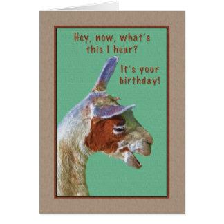 Birthday, Laughing Llama Card