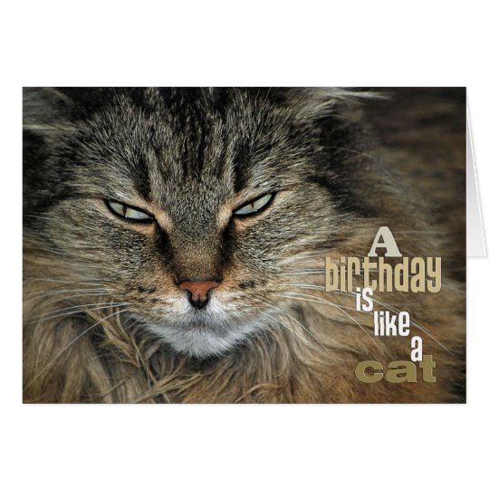 Birthday Maine Coon Cat humour Card