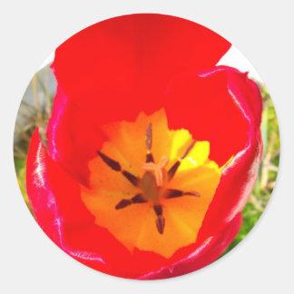 Birthday - mum round sticker