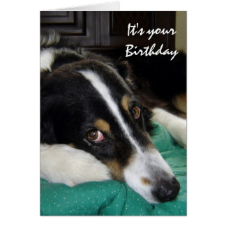 Birthday Old Age Humor Border Collie Dog Pet Card