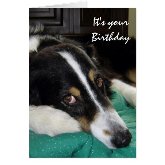 Birthday Old Age Humour Border Collie Dog Pet