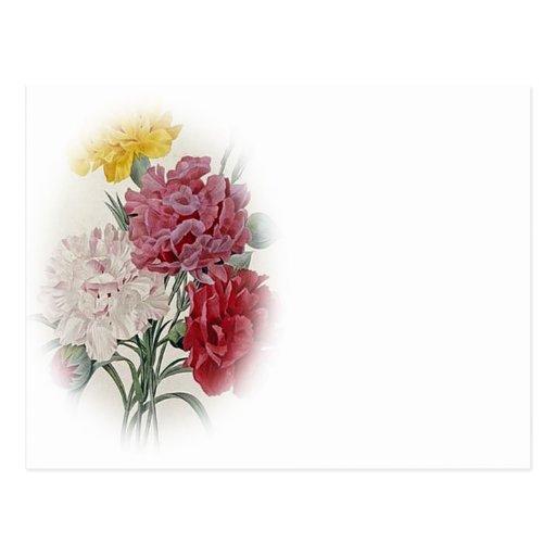 Birthday Pinks - Soft Edged Oval Postcard