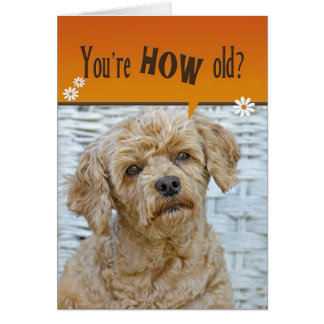 Birthday Pup Card