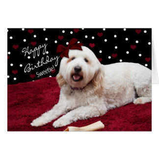 BIRTHDAY - SWEETIE - GOLDEN DOODLE GREETING CARD