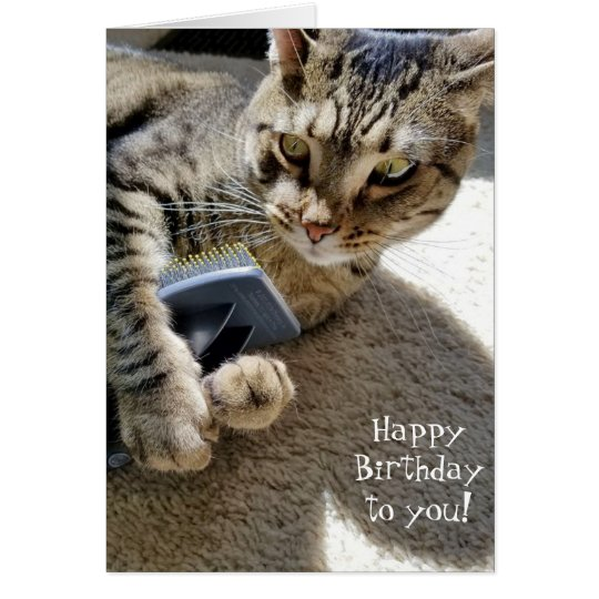 birthday tabby cat with brush card