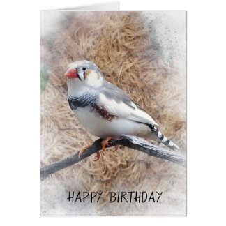 birthday-zebra finch on branch card