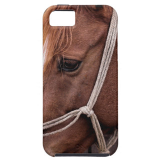 Biscuit iPhone 5 Cases