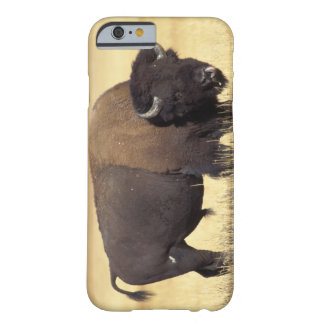 bison, Bison bison, bull in Yellowstone National Barely There iPhone 6 Case