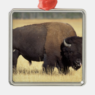 bison, Bison bison, bull in Yellowstone National Christmas Ornament