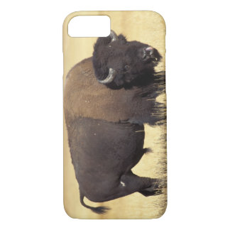 bison, Bison bison, bull in Yellowstone National iPhone 8/7 Case