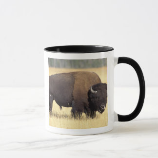 bison, Bison bison, bull in Yellowstone National Mug
