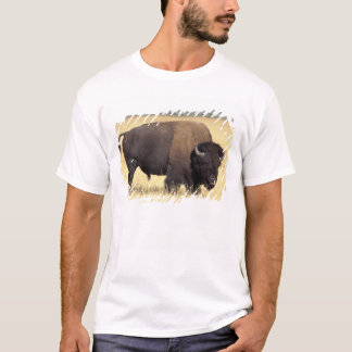 bison, Bison bison, bull in Yellowstone National T-Shirt