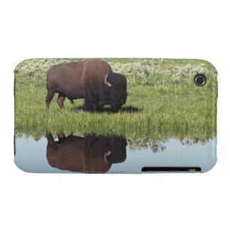 Bison (Bison Bison) On Grassy Meadow iPhone 3 Case-Mate Cases