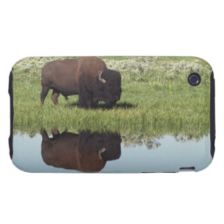 Bison (Bison Bison) On Grassy Meadow iPhone 3 Tough Cases
