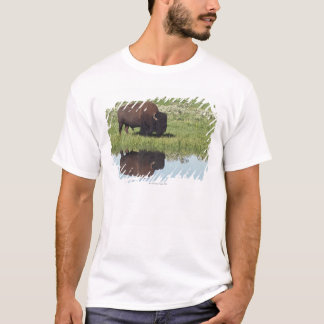 Bison (Bison Bison) On Grassy Meadow T-Shirt