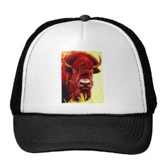 Bison Buffalo Face Hats