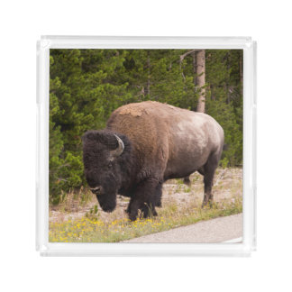 Bison Buffalo Photo Serving Tray