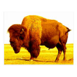 Bison / Buffalo Post Card