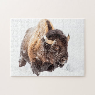 Bison bull foraging in deep snow puzzle