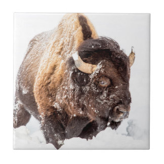 Bison bull foraging in deep snow tile