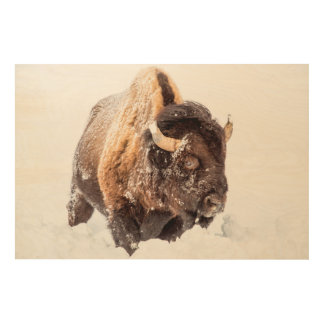 Bison bull foraging in deep snow wood wall decor