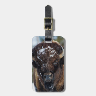 Bison Bull, winter 1 Luggage Tag