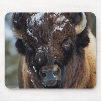 Bison Bull, winter 1 Mouse Pad