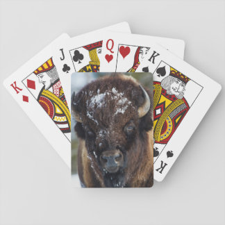 Bison Bull, winter 1 Playing Cards