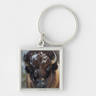 Bison Bull, winter 1 Silver-Colored Square Key Ring