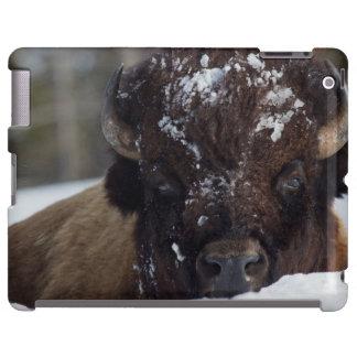 Bison Bull, winter 2 iPad Case
