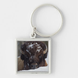 Bison Bull, winter 2 Silver-Colored Square Key Ring