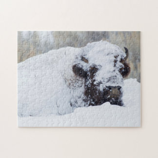 Bison Bull, winter coat Jigsaw Puzzle