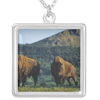 Bison bulls at Waterton Lakes National Park in Silver Plated Necklace