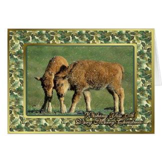 Bison Calves North American Animal Christmas Card