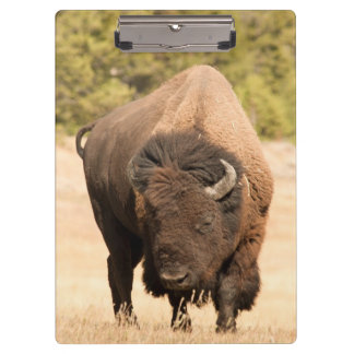 Bison Clipboard