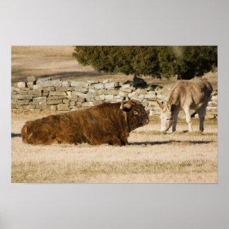 Bison & Donkey Print