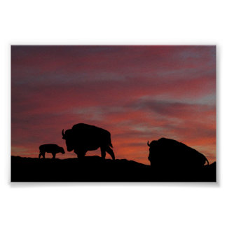 Bison family print