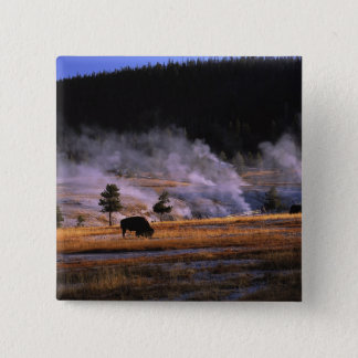 Bison grazing in the Upper Geyser Basin near 15 Cm Square Badge