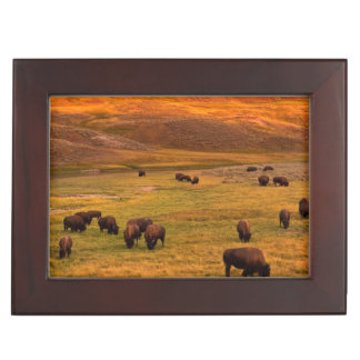 Bison Grazing on Hill at Hayden Valley Keepsake Box