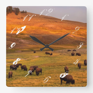 Bison Grazing on Hill at Hayden Valley Square Wall Clock