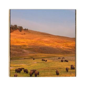 Bison Grazing on Hill at Hayden Valley Wood Coaster