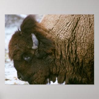 Bison head print