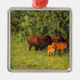 Bison Herd at Neil Smith NWR in Iowa Christmas Ornament