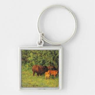Bison Herd at Neil Smith NWR in Iowa Key Ring