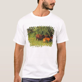 Bison Herd at Neil Smith NWR in Iowa T-Shirt